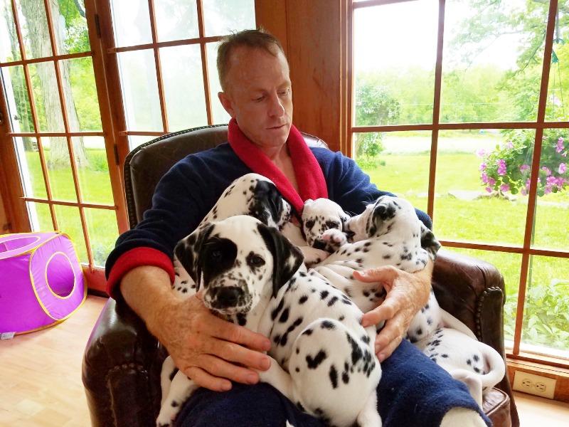 5 Gibson x Dinah puppies_edit