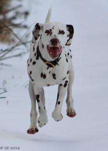 Thriller in the snow